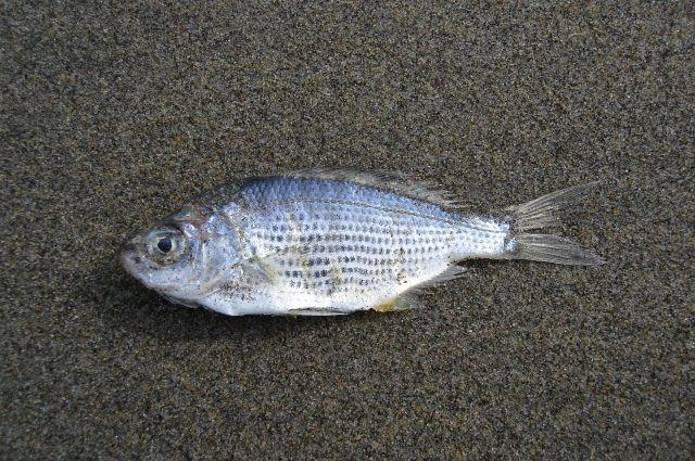 Погибло более 400 рыб.