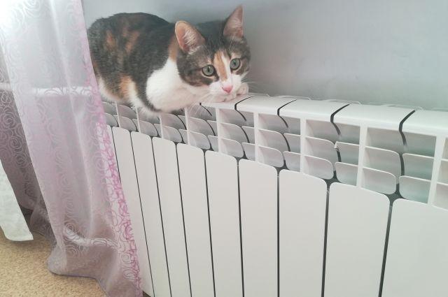 В первую очередь нужно найти причину, по которой батарея холодная