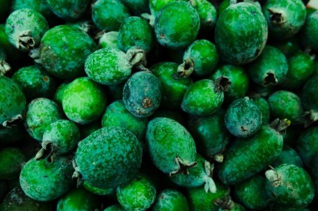Фейхоа: полезные свойства экзотического фрукта