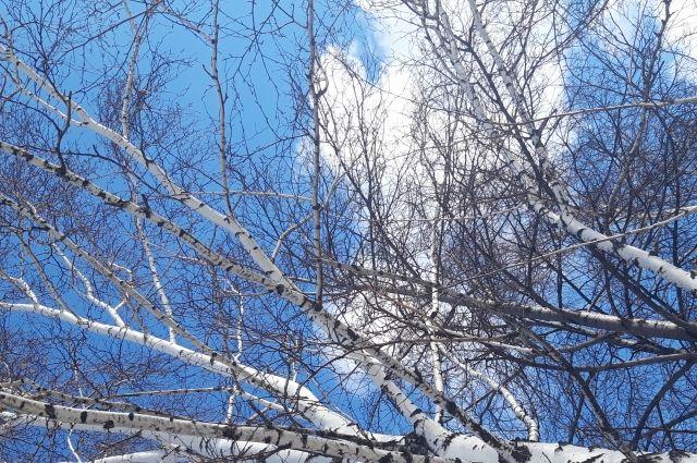 Синоптики спрогнозировали погоду на начало недели в Новосибирске