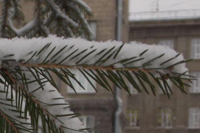 В Новосибрске возможен небольшой снег.
