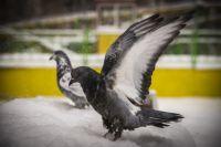 В Новосибирск придет небольшое похолодание
