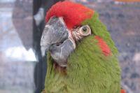 Тюменская прокуратура заблокировала сайты по продаже краснокнижных попугаев