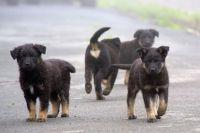 В Шурышкарском районе дети боятся бродячих собак