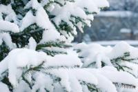 В Новом Уренгое рабочие укладывали плитку на снег