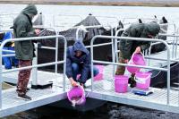 Заводом отправлено на переработку более семи тонн рыбы