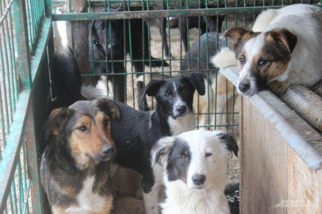 В 2020 году на отлов и содержание 8 тысяч собак на территории всей республики направили 32 млн рублей - по 4 тыс. на одну особь.