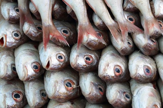 На Ямале выбрали лучших обработчиков рыбы