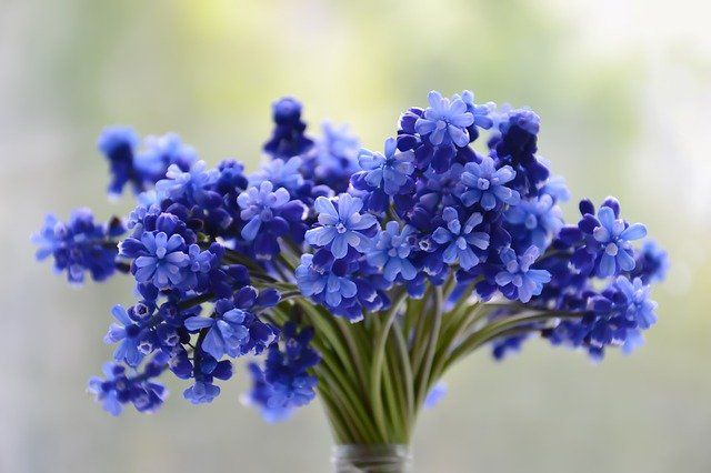 Тюменцы могут порадовать близких цветами в День матери