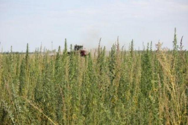 В Орске суда вынес приговор мужчине за незаконное приобретение и хранение наркотических средств.