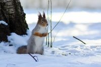 До субботы днём прогнозируются  9-14 градусов мороза.