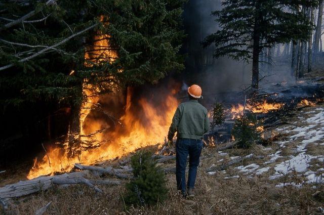 Причиной почти трети лесных пожаров в Прикамье стали грозы