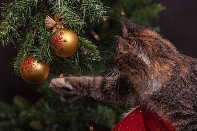 В Петербурге хотят запретить детские елки и закрыть рестораны в праздники