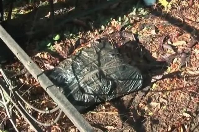 Пачки с пятитысячными купюрами были упакованы в мусорный пакет и совсем чуть-чуть присыпаны землей и листвой.