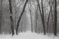 Мощная волна холода подбирается к Новосибирской области. Уже на этой неделе температура воздуха упадет до -26 градусов.