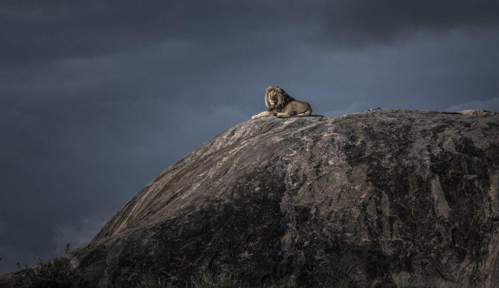 Король Лев.