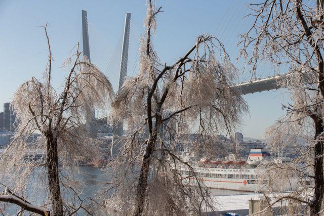 Лёд сковал кроны деревьев.