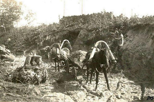 Лошади на строительстве - с их помощью перевезли сотни тысяч кубометров грунта. Брянская ГРЭС. 1928.