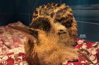 Птица давно должна была покинуть территорию Сибири.
