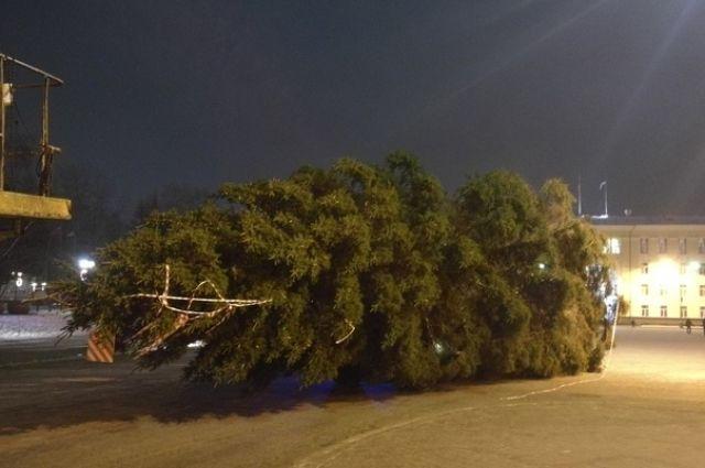 Лесную красавицу срубили в Усть-Вымском районе.