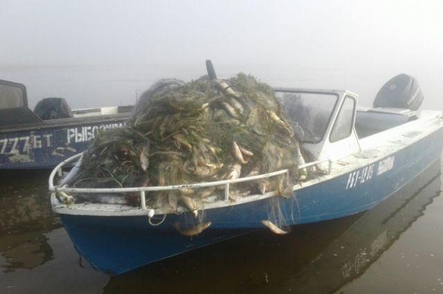В этом году заложили больше 1 млрд икры омуля, к маю следующего года она превратится в мальков, которых выпустят в озеро.