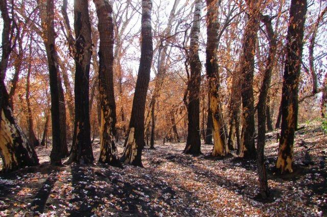 Пока здесь вновь зашумят зеленью листвы взрослые сильные деревья, пройдет очень много времени.