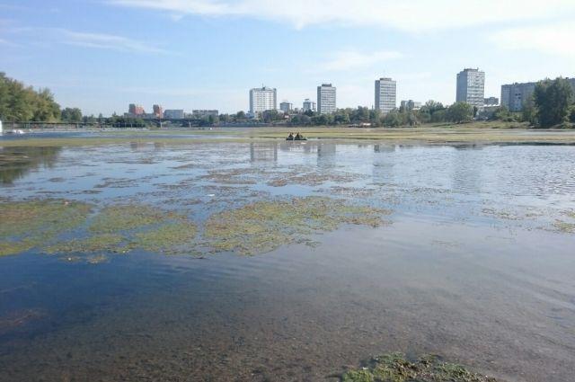 Из-за труб в дамбе протока снизила свою скорость, потому активно растут водоросли.