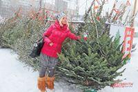 Где в Оренбурге можно будет купить елку?