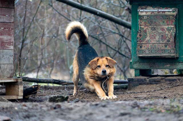 С начала года в Коми отловили 1215 бродячих собак.