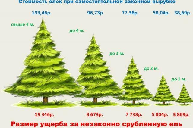 В этом году за живую зелёную красавицу придётся заплатить дороже.