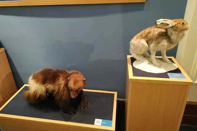 В Салехарде открылись две выставки в честь 90-летия округа