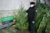 Тюменские таможенники изъяли шесть тонн новогодних елок