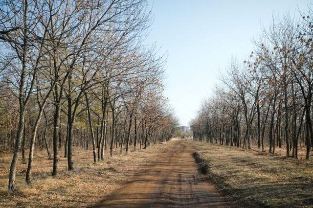Поправки «Единой России» в Лесной кодекс сделают сферу оборота древесины более прозрачной.