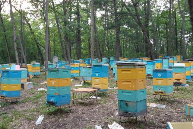 Пчеловод – призвание, нелёгкий труд и масса положительных эмоций.