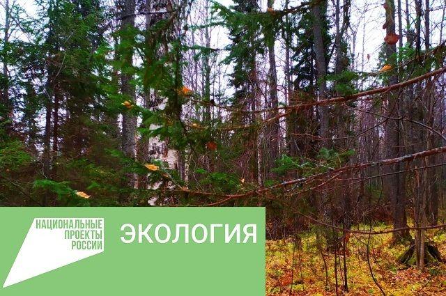 Площадь посадки леса в 2020 году увеличилась на 53% по сравнению с 2017 г.