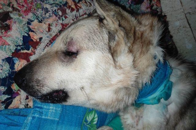 Собака жива, но испытывает сильные боли.