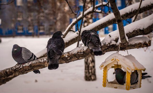По данным синоптиков, сегодня днем температура воздуха составит от 4 до 9 градусов морозов. А некоторых районах — до -14.