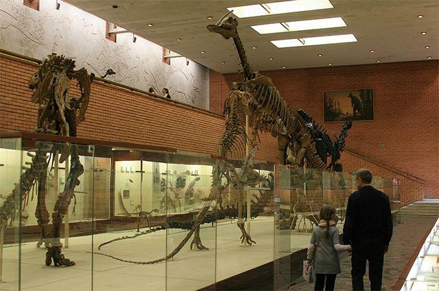 Палеонтологический музей в Москве.