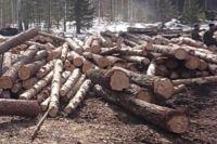 Заготовку древесины вели под видом создания противопожарной полосы.