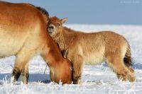 В Оренбуржье ведутся переговоры с Миннесотским зоопарком.