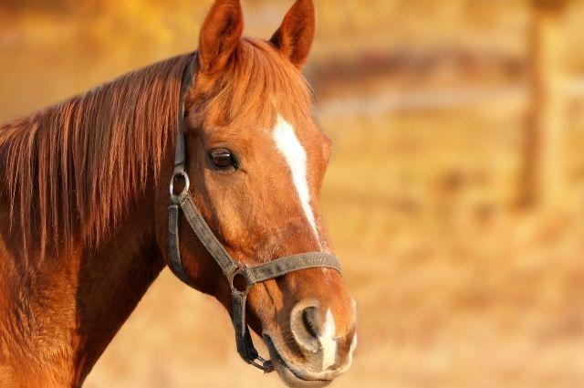 Спасатели в Башкирии помогли лошади, упавшей под пол сарая