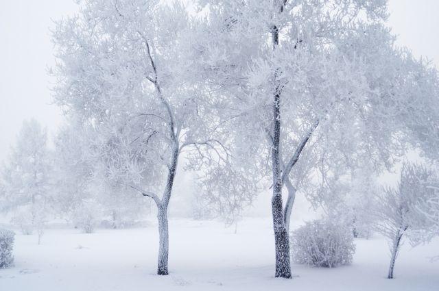 В ночь на 28 декабря зафиксирован абсолютный минимум этого года -45 градусов.