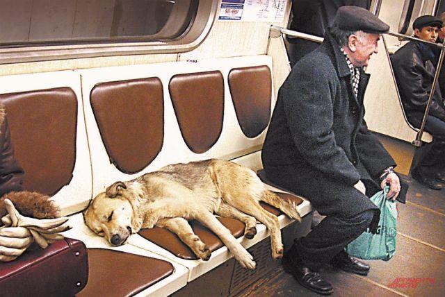 В городе сейчас 7 тысяч безнадзорных собак.
