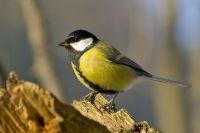 Орнитологи рассказали, что замерзших птиц находят с расправленными крыльями