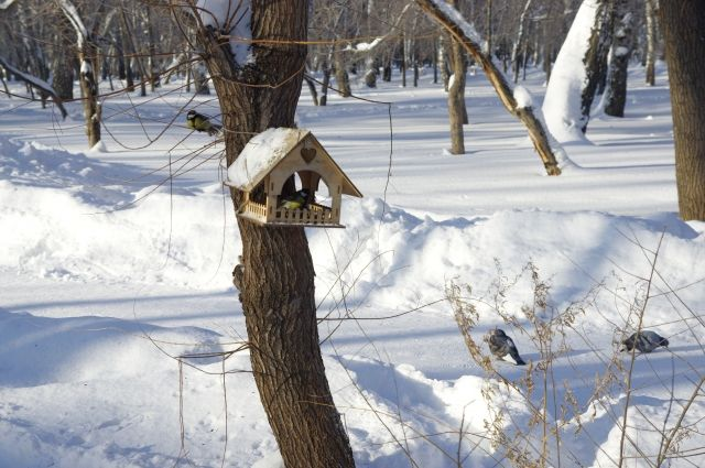 Морозные каникулы пообещала жителям Новосибирской области начальник Западно-Сибирского Гидрометцентра Анна Лапчик во время пресс-конференции в ТАСС.