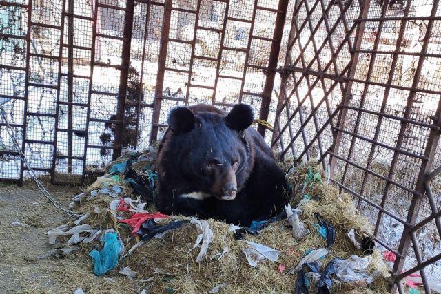 Медведю Артёму в старой клетке было невыносимо.