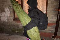 Тюменцев с живыми елками ждут в зоопарке