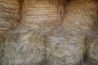 Дележка бизнеса: семье фермеров из Оренбуржья угрожают и жгут хозяйство конкуренты.
