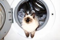 Когда скучно, вы всегда можете помыть кота. Но мы нашли ещё десять развлечений!