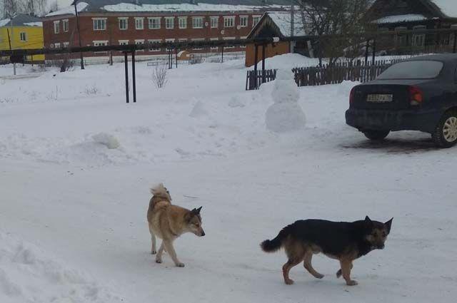 Только за первые дни этого года в Ухте произошло с десяток новых нападений собак на людей.